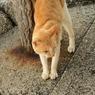 SONY DSLR-A700で撮影した動物(にゃん。)の写真(画像)