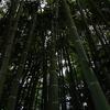 竹林を仰ぐ