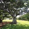 LIGHT AND TREE