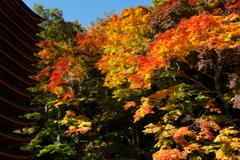 紅葉 談山神社 #001