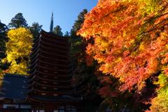 紅葉 談山神社 #003