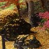 秋いろいろです。(成田山公園の秋⑤)