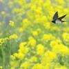 春色の中で^^