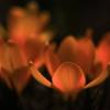 春を告げる花♪⑤