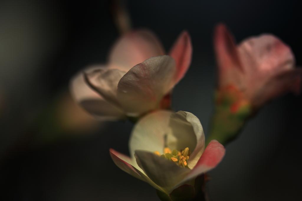 咲いちゃった^^;