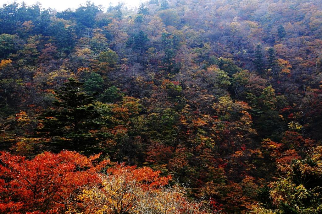 秋色の塩原渓谷