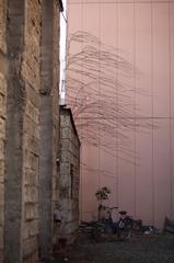 蔦の流れる袋小路