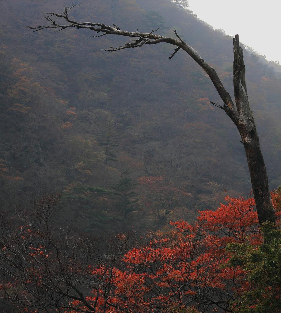 古木と紅葉