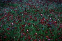 悲しみの花畑