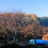 朝日のあたる里山の晩秋