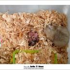 OLYMPUS E-400で撮影した動物(ハムスター子 3)の写真(画像)