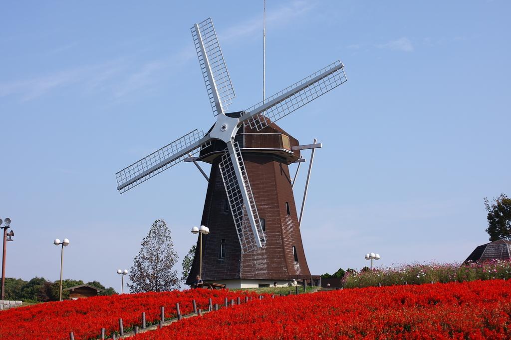 風車とサルビア