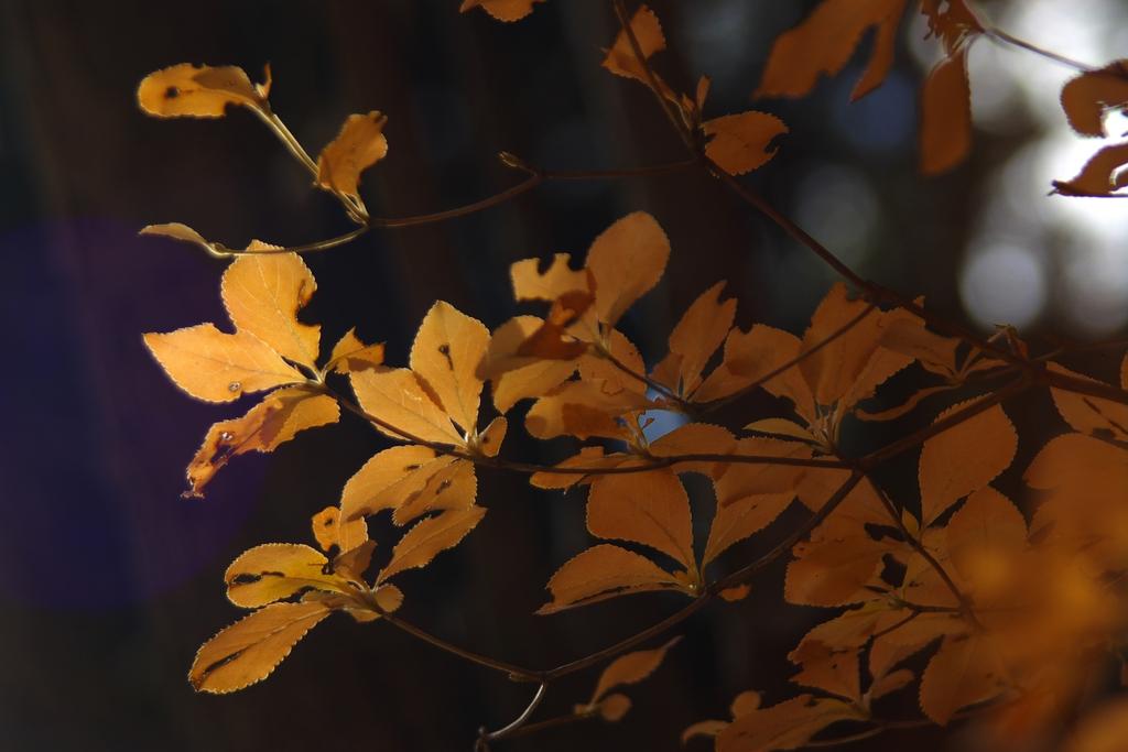 晩秋の風情8