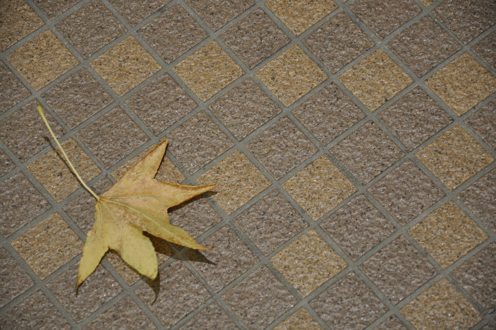 秋も深まって