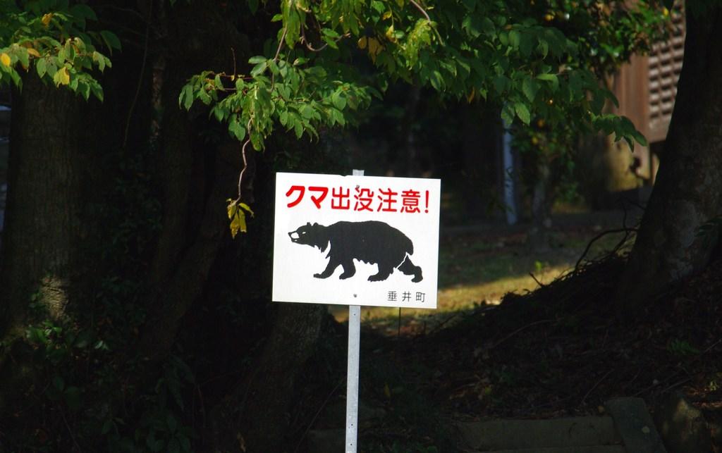 熊が出るらしい