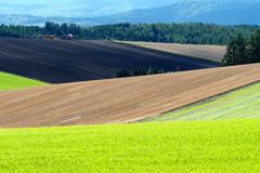 織 り な す 丘