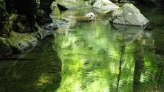 静かに流れる   ~ silent flow ~