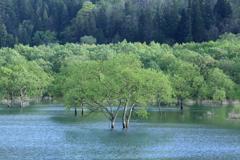 木々は母なる湖の懐で