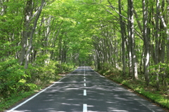 Driving in the beech forest