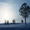 冬陽 (ふゆひ)