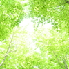 新緑の候 -season of new green leaves-
