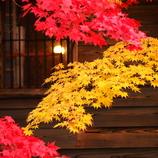 紅黄 (こうおう)