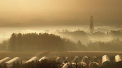Contrastic fog morning