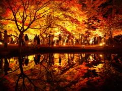 秋 を 愛(め) で る
