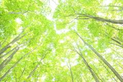 Pale Green Shower