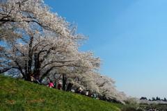桜味 (おうみ)
