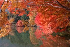 山梨の紅葉