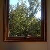 となりの栗の木