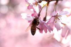春の香りに誘われて