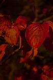 紅葉_07
