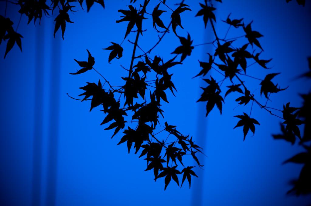 紅葉、見上げて。