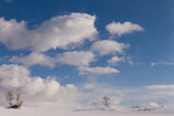 空と雪と木