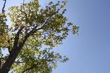 萌える木立