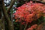 秋ですね〜〜