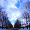 冬のメタセコイア通り 2011