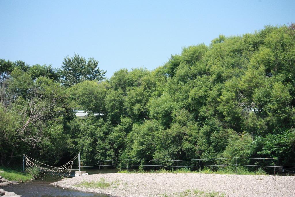 川と木と空