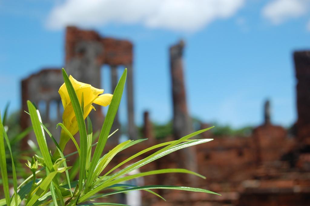 遺跡に咲く一輪の花