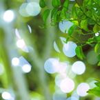 CANON Canon EOS 7Dで撮影した(緑  葉)の写真(画像)