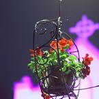 CANON Canon EOS 7Dで撮影した(聖なる夜のハンキング)の写真(画像)