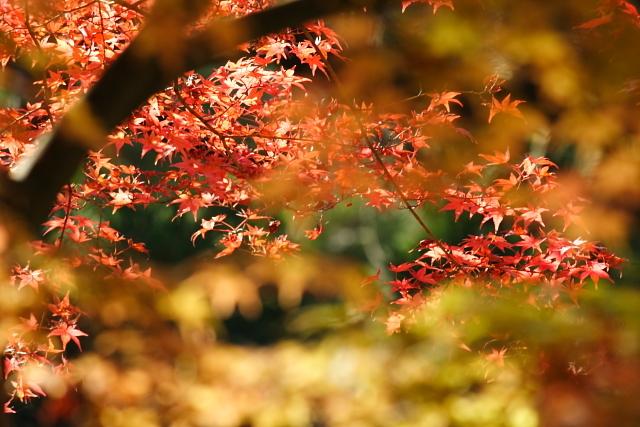 文知摺観音の秋