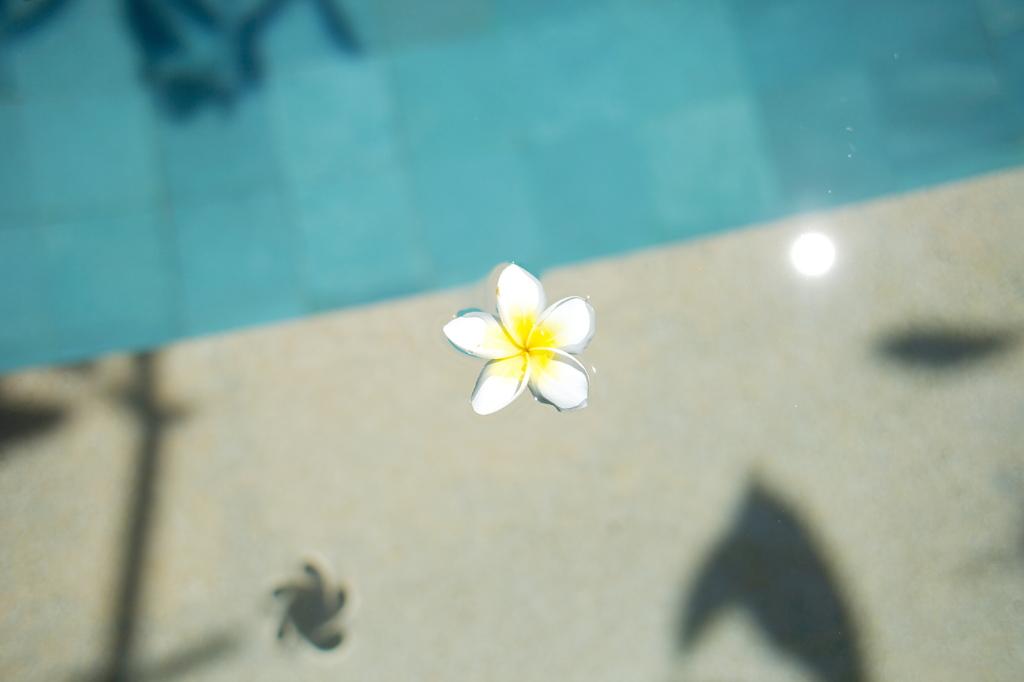 水に浮かぶプルメリア
