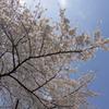 桜で試し撮り