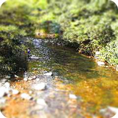 キャンプ場の川