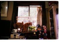 KONICA HEXAR RFで撮影した動物(ぎゅうぎゅう)の写真(画像)