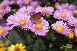 花と蝶・・・違うか