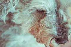 my pretty dog # 140